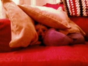 Snuggle!