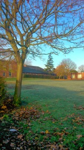Frosty_Trees_Middlewich