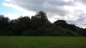 fairy-magic-in-the-trees-spookymrsgreen