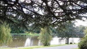 fairy-tree-lake-spookymrsgreen