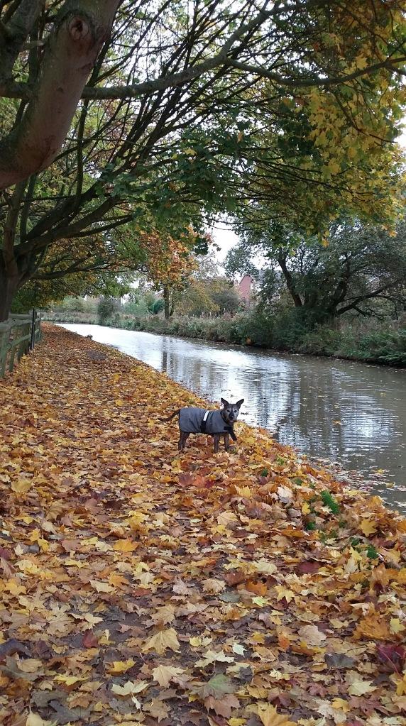 autumn-baxter-walk-spookymrsgreen