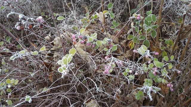 frozen-wild-berries-spookymrsgreen