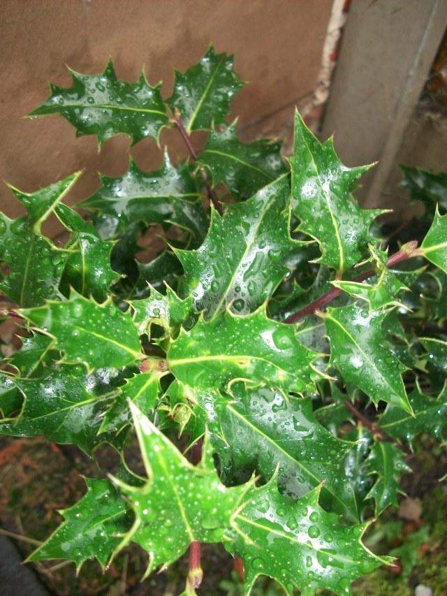 merry-solstice-spookymrsgreen