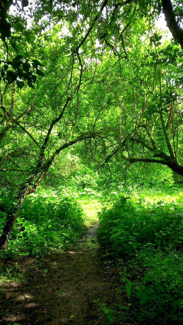 Enchanted Woodland Path SpookyMrsGreen
