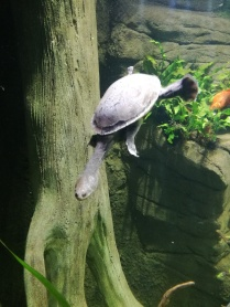Snake Head Turtle SEA LIFE Manchester