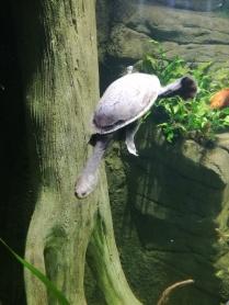 Snake Head Turtle SEA LIFE Manchester