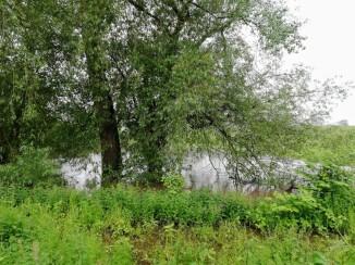 Flooded River Weaver