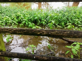 River Flood to Pathway