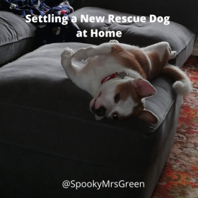 Settling a New Rescue Dog at Home