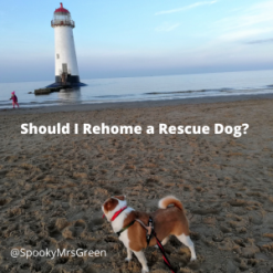 Should I Rehome a Rescue Dog_